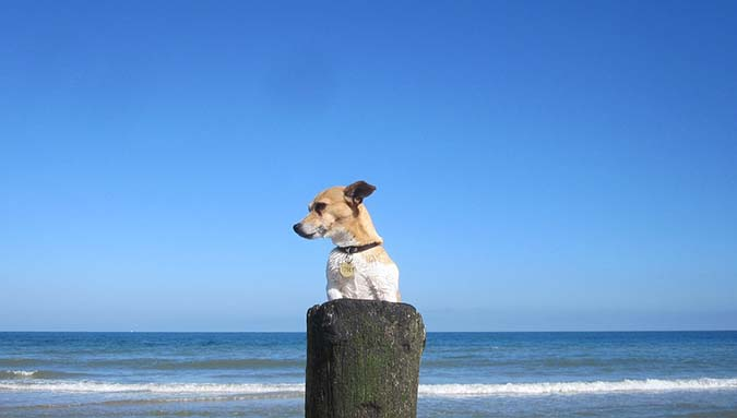 beach-834891_1280