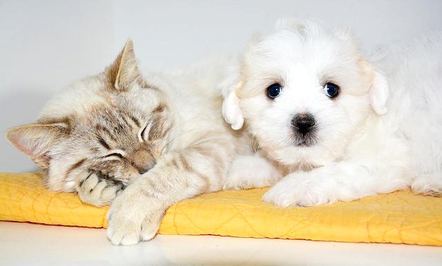 cat-2214566_640