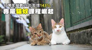 台灣家貓數四年激增143%!專屬貓奴課程崛起