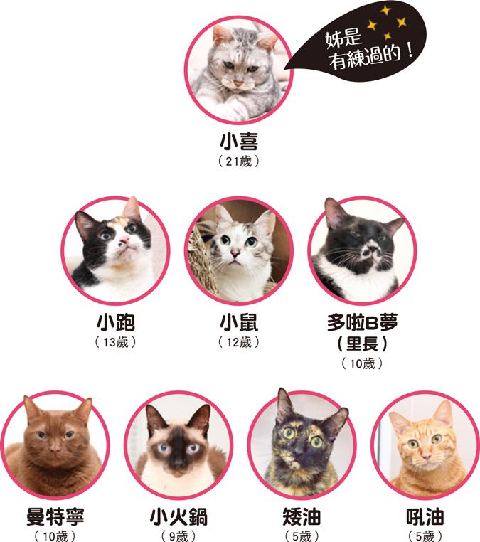 web_banner_1015_小跑貓嗚嗚_2