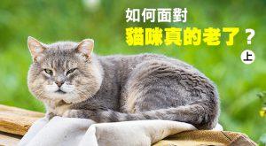 web_banner_1024_如何面對貓咪真的老了_上集