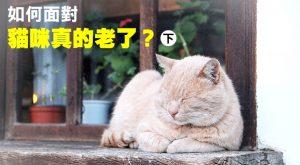 web_banner_1024_如何面對貓咪真的老了_下集