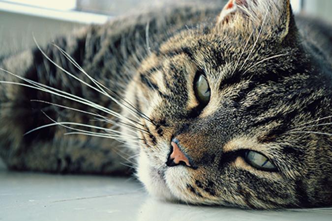 old-cat4