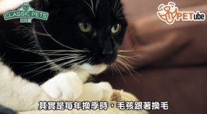 哈寵PETube-No.100 貓咪換季症頭不要來