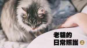 web_banner_1106_老貓的日常照護_上集