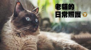 老貓的日常照護(下)