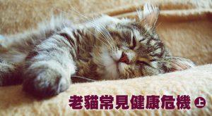 老貓常見健康危機(上)