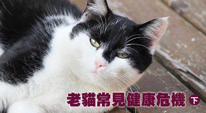 老貓常見健康危機