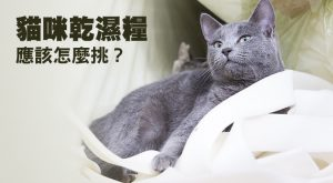 貓咪乾濕糧應該怎麼挑?