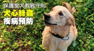 保護愛犬教戰守則 犬心絲蟲疾病預防