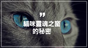 貓咪靈魂之窗的秘密