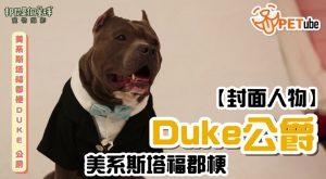 哈寵PETube-No.113 美系斯塔福郡梗-Duke公爵
