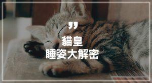 貓皇睡姿大解密