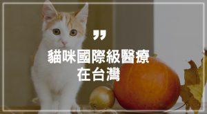 貓咪國際級醫療在台灣