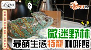 哈寵PETube-No.116 最萌生態特寵咖啡館——微迷野林