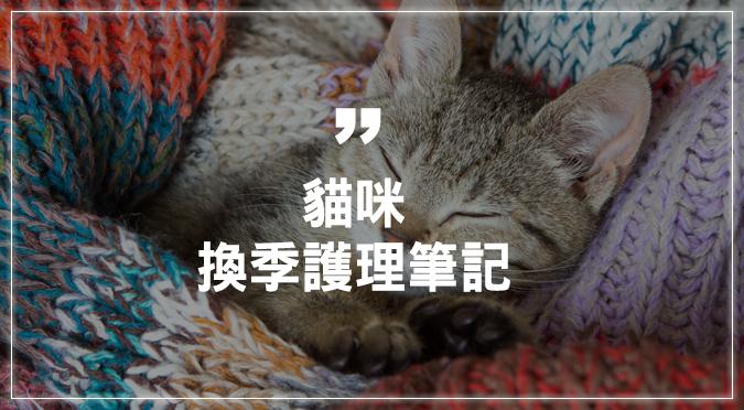 貓咪換季護理筆記