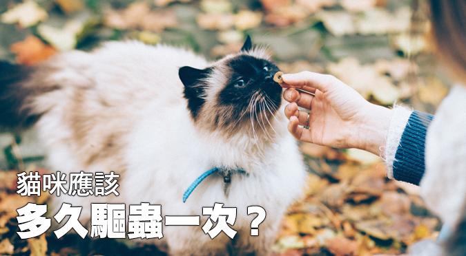 貓咪應該多久驅蟲一次?