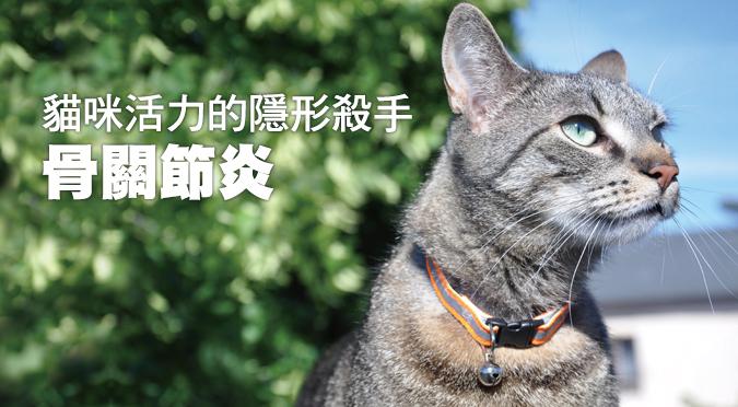 貓咪活力的隱形殺手——骨關節炎