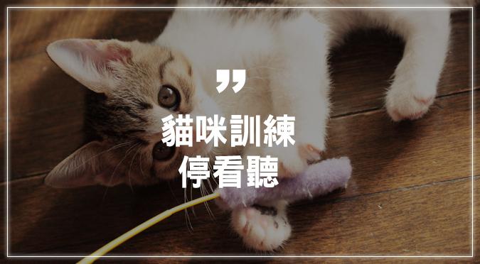 貓咪訓練停看聽