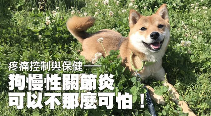 疼痛控制與保健──狗慢性關節炎可以不那麼可怕!