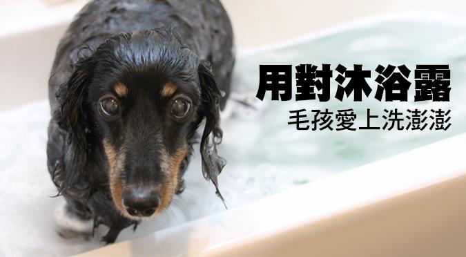 用對沐浴露 毛孩愛上洗澎澎