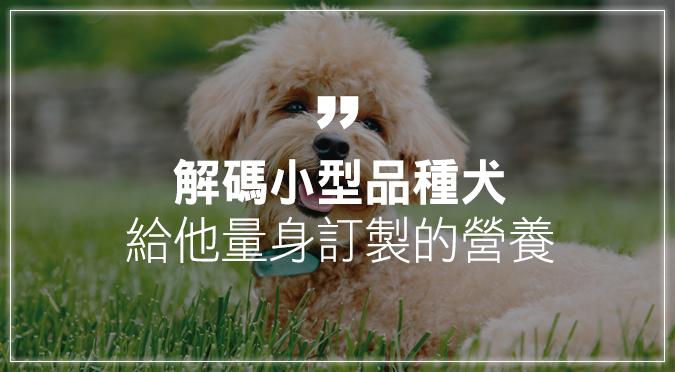解碼小型品種犬  給他量身訂製的營養