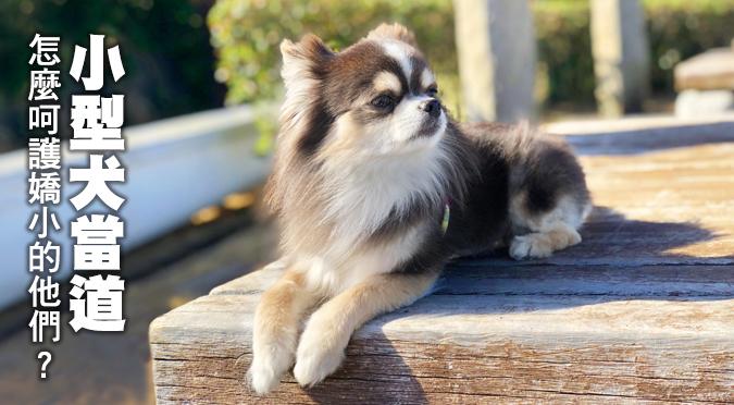 小型犬當道 怎麼呵護嬌小的他們?