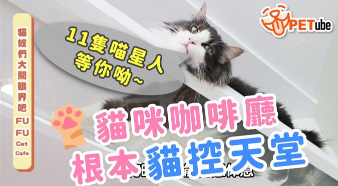 哈寵PETube-No.132 貓奴們大開眼界吧!(feat.FUFU Cat Cafe)