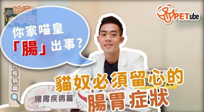 哈寵PETube-No.133 貓咪腸胃疾病篇(feat.戢皓翰獸醫師)