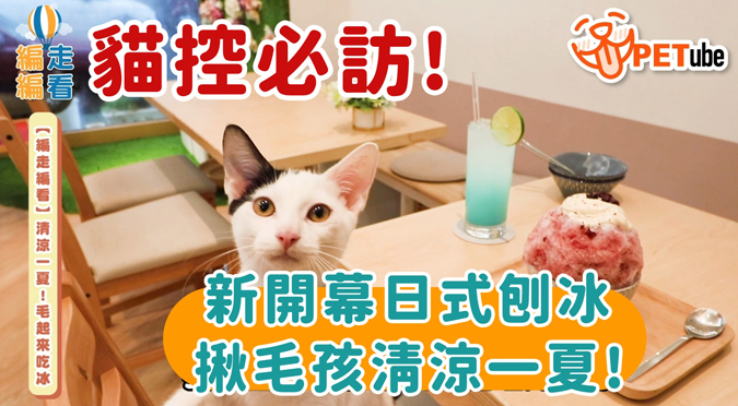 哈寵PETube-No.134 清涼一夏!毛起來吃冰(feat.貓狗冰室)