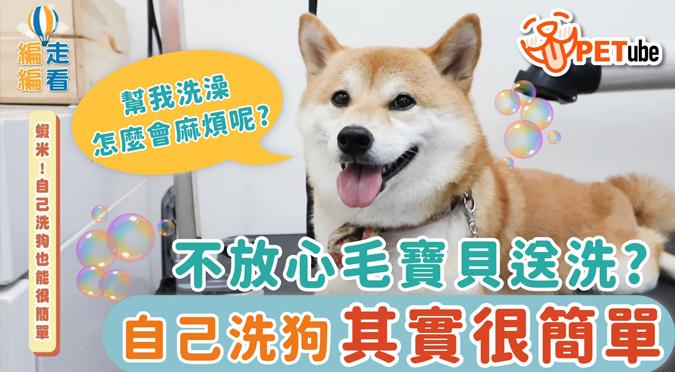 哈寵PETube-No.137 蝦米!自己洗狗也能很簡單
