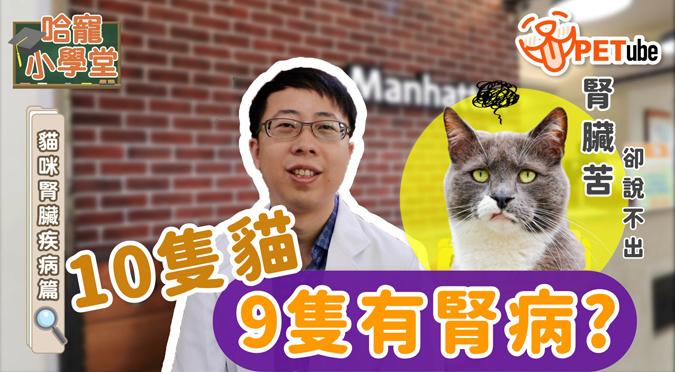 哈寵PETube-No.140 貓咪腎臟疾病篇(feat.葉肇晟獸醫師)