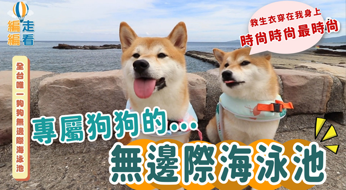 哈寵PETube-No.142 全台唯一狗狗無邊際海泳池