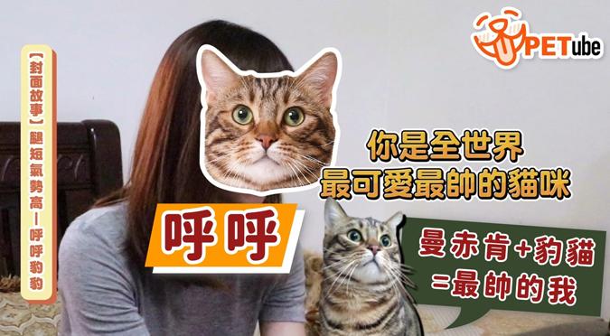哈寵PETube-No.143 腿短氣勢高——呼呼豹豹