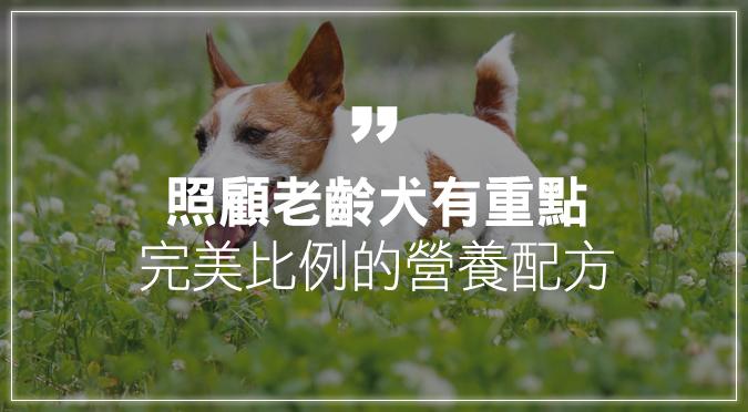 照顧老齡犬有重點  完美比例的營養配方