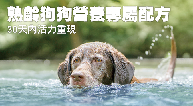 熟齡狗狗營養專屬配方 30天內活力重現