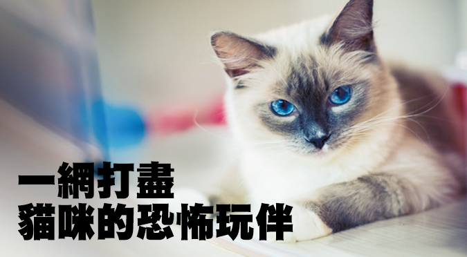 一網打盡貓咪的恐怖玩伴
