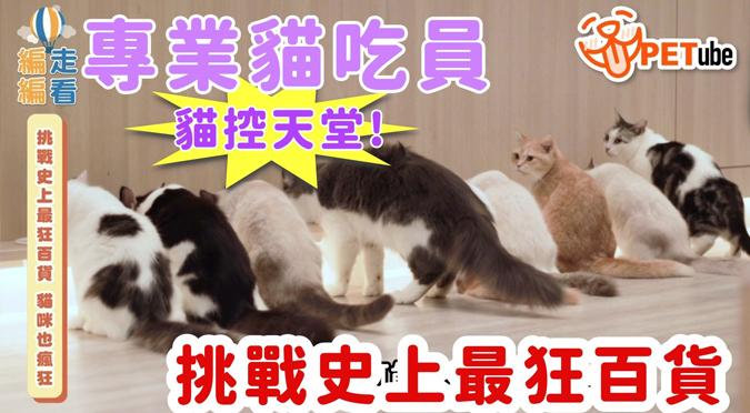 哈寵PETube-No.149 挑戰史上最狂百貨 貓咪也瘋狂