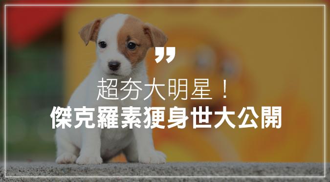 傑克羅素㹴犬身世大公開!超夯電影大明星