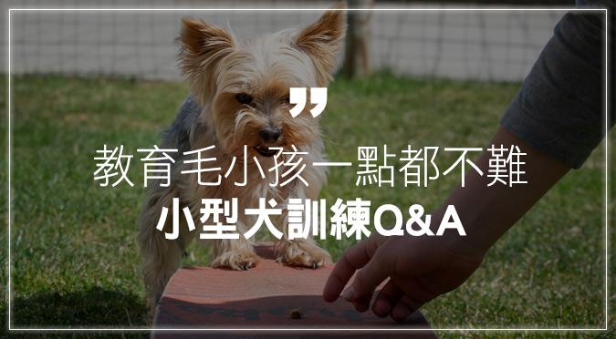 狗狗要怎麼訓練?小型犬飼養、訓練Q&A
