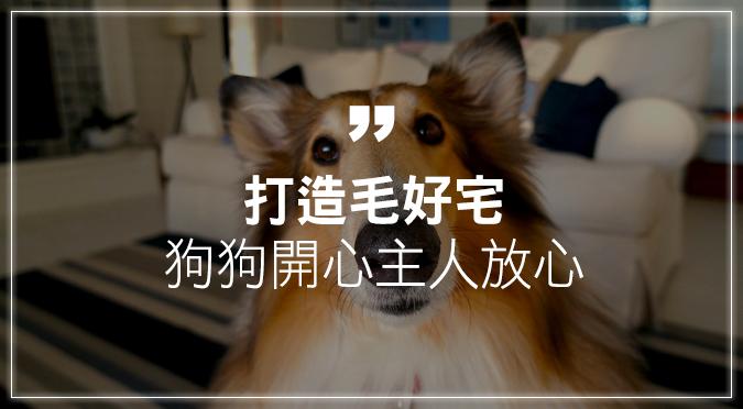 打造狗狗安心居家環境 室內空間設計要注意
