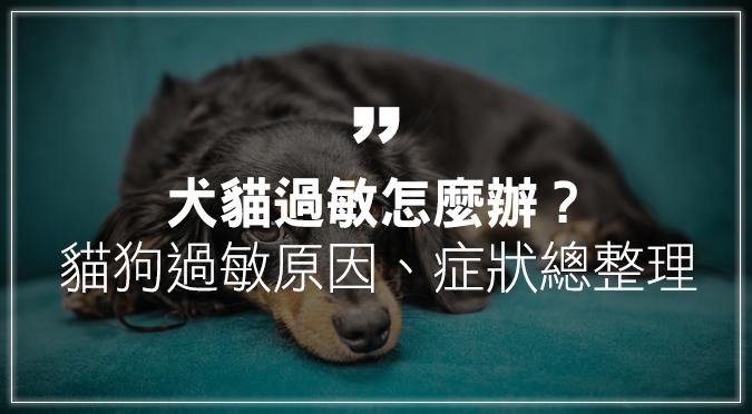 犬貓過敏怎麼辦?貓狗過敏原因、症狀一次看