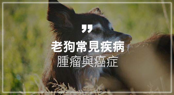 老狗常見疾病——腫瘤與癌症