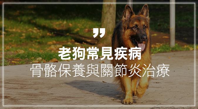 老狗常見疾病——骨骼保養與關節炎治療