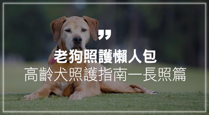 【老狗照護懶人包】高齡犬照護指南——長照篇