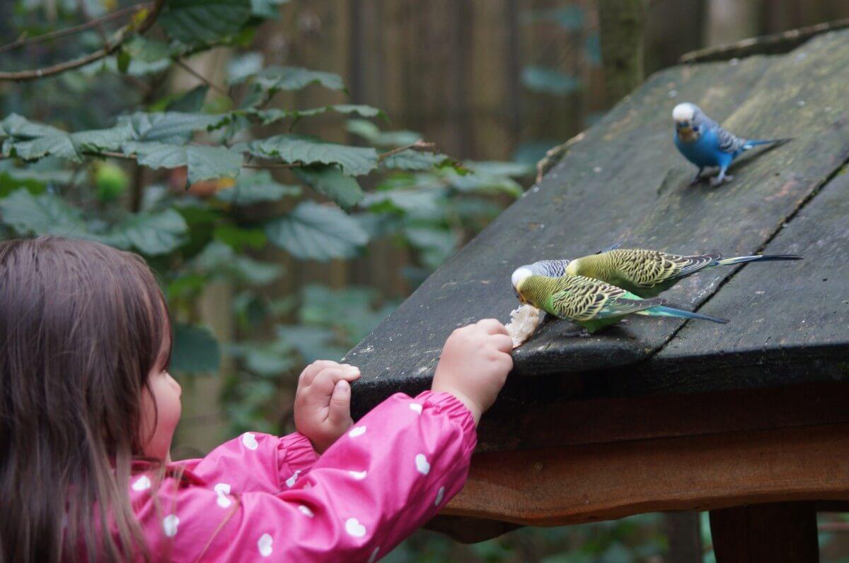 自己居家狀況、鸚鵡的習性和體型,在飼養前都要做足功課