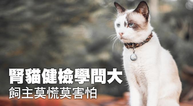 腎貓健檢學問大 飼主莫慌莫害怕