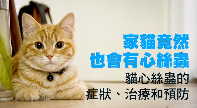 家貓竟然也會有心絲蟲!貓心絲蟲的症狀、治療和預防