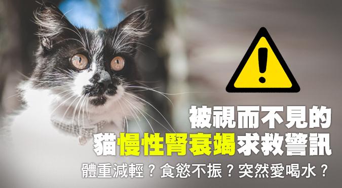 體重減輕?食慾不振?突然愛喝水?被視而不見的貓慢性腎衰竭求救警訊!