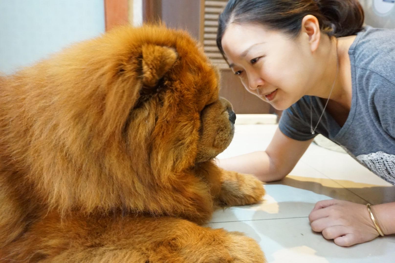 原本怕狗的露露媽,現在對鬆獅的愛儼然已經超越了一切